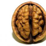 Връзката между храненето и бодрия ум