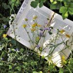 """Стартира инициативата """"Зелени библиотеки"""", насърчаваща четенето в столичните паркове"""